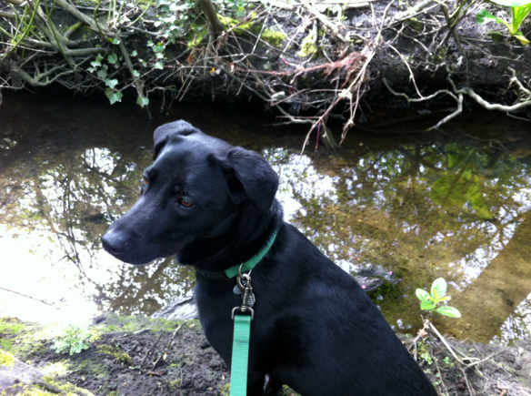 dog at licton springs