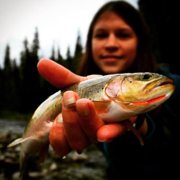 Idaho trout.